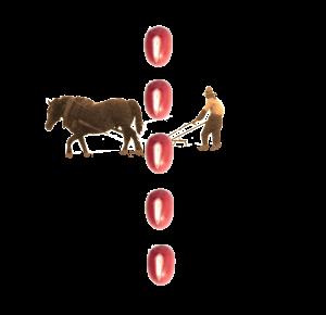 馬耕と小豆の点線